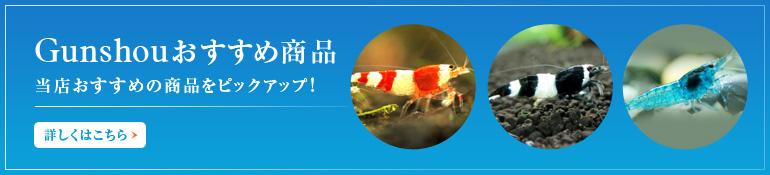 Gunshou おすすめ商品